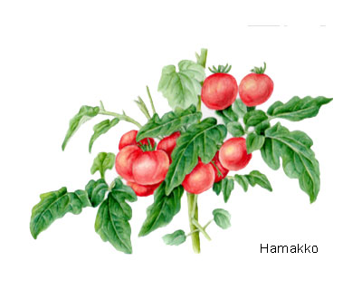 Started drawing this picture when it had many tomatoes